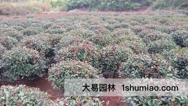 花灌木的质量标准