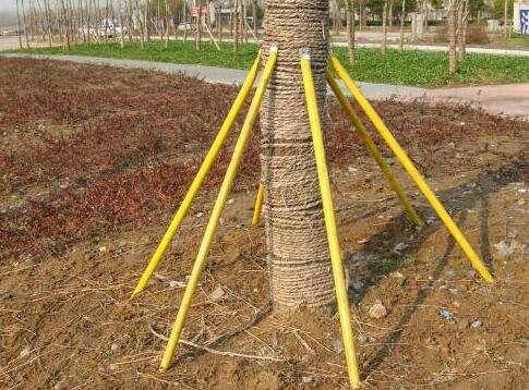 树木长歪了
