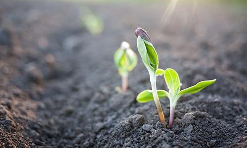 土壤环境指标