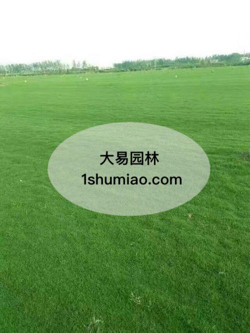 草坪的养护