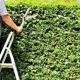 灌木及藤蔓类种植前的修剪要点?
