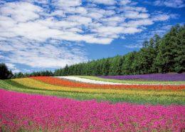 花卉栽种的要点