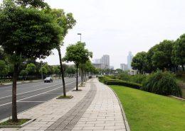 行道树的种植方法