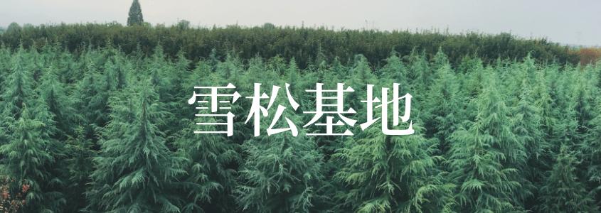 雪松专题首页banner-大易园林