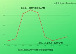 白皮松20年市场数据示意图