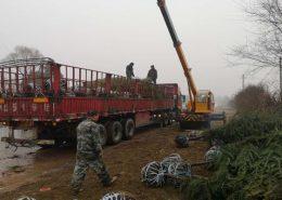 跨省运输苗木运费计算