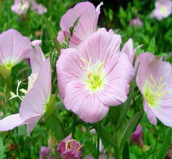 花卉地被植物