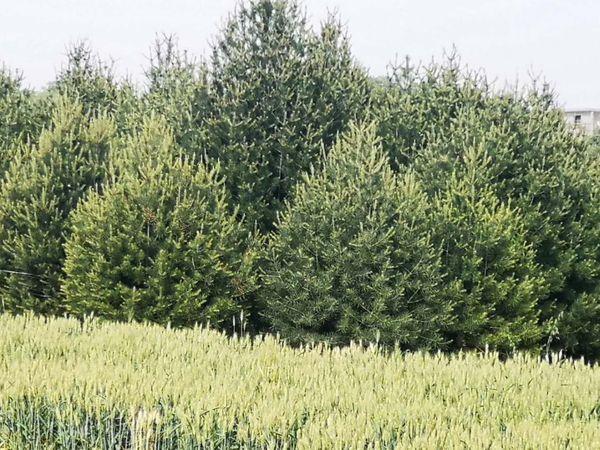 想要多大的冠幅就制定多远的栽种距离