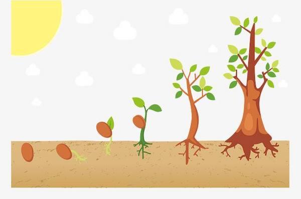春季苗木市场