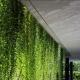 立体绿化是把树木立起来?你可能想多了