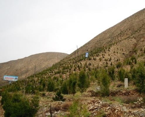 荒山绿化的必要性