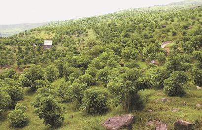 荒山绿化可以节能减排
