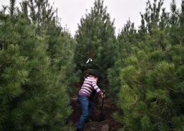 解封后的苗木行业:困境与破局