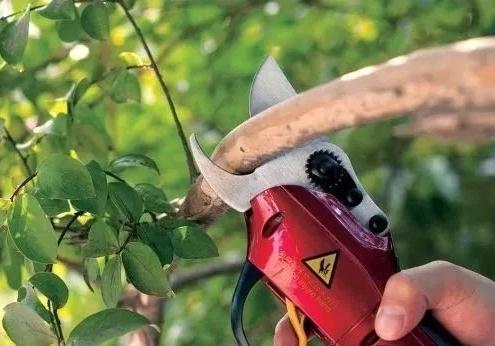 环境也是苗木养护中不可忽视的因素