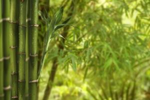 zaoyuanzhu-0707-liting-2